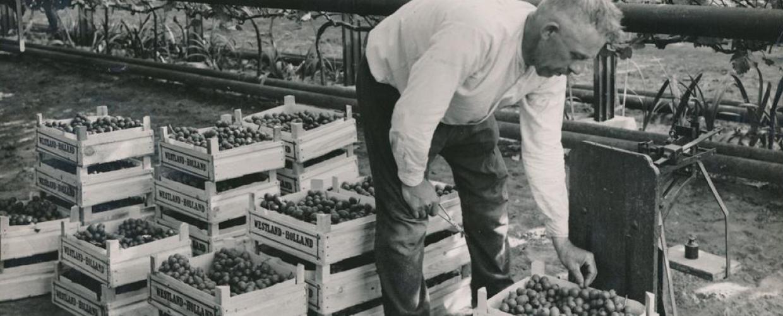 Geschiedenis-Rene-van-Schie-Potplanten-v1.4
