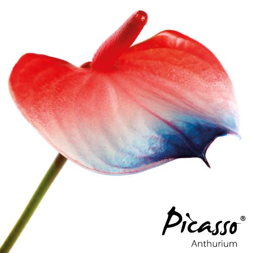 Picasso - Close Frankrijk -Assortiment - René van Schie Potplanten