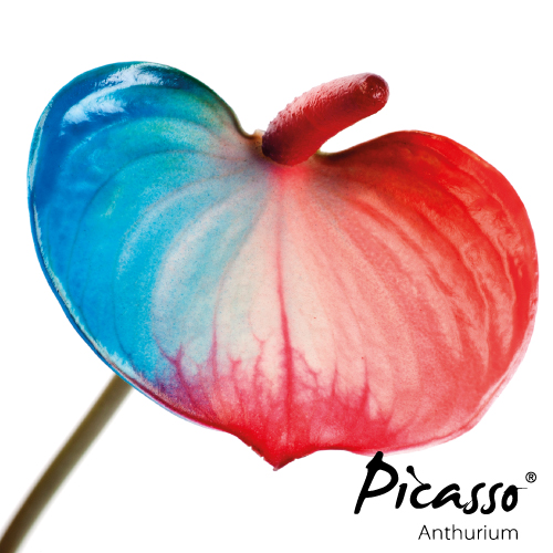 Picasso - Close Nederland - Assortiment - René van Schie Potplanten