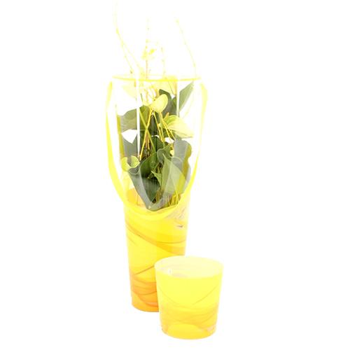 Tube Pasen Yellow - Assortiment - René van Schie Potplanten